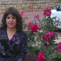 שרה כהן